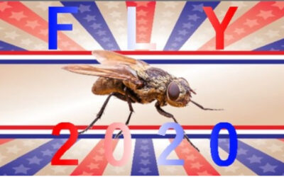 De moscas, impuestos y aniversarios
